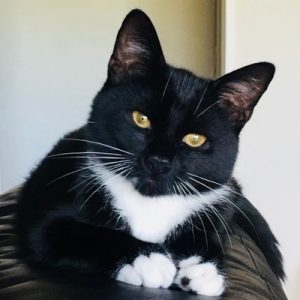 photo of black and white cat facing camera
